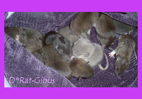 Nos bêtes à poils ^^ - Page 5 13-02groupe